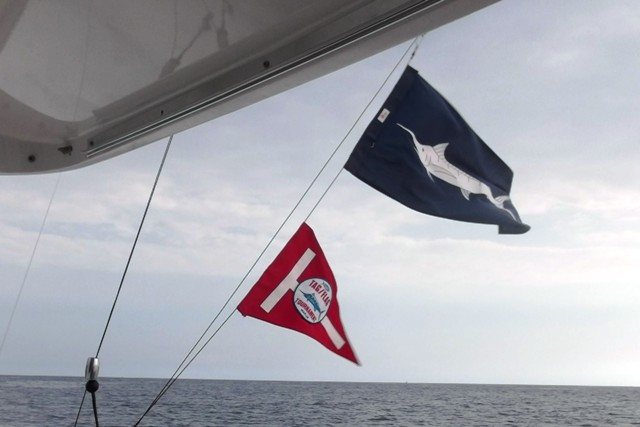 The top flag indicates a marlin, and the bottom flag that it has been tagged and released.